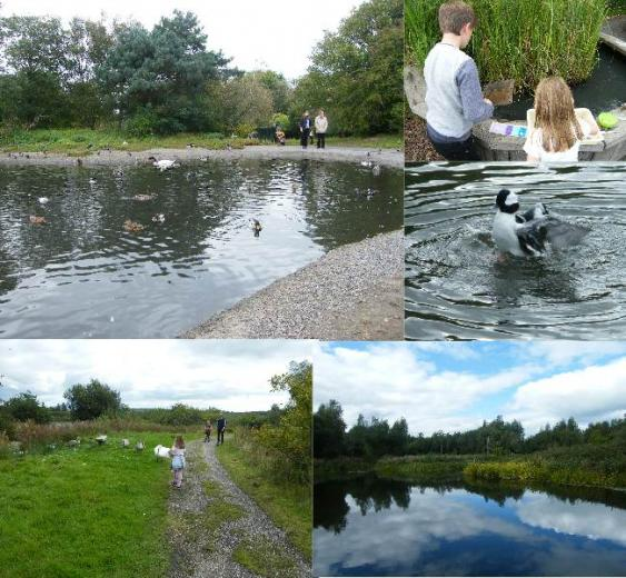 Visit Llanelli Wetland Centre and experience a day out like no other. There really is something for everyone.